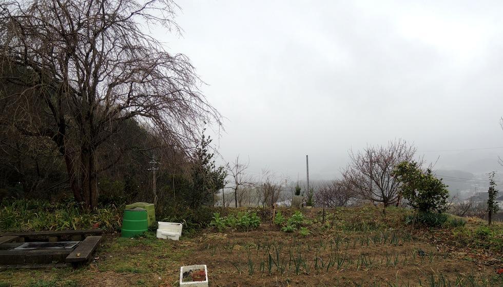 しだれ桜の家_奈良県菊美台